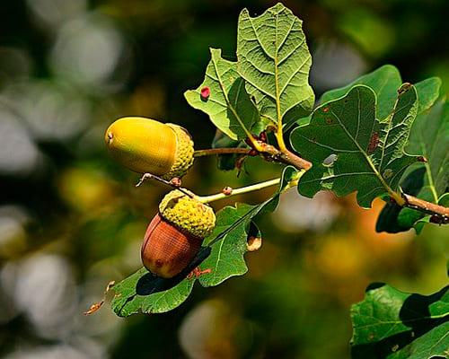 Виды и название растений на испанском языке