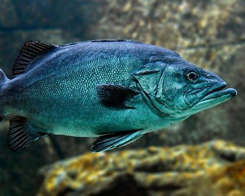 Испанские фразы на тему виды рыб