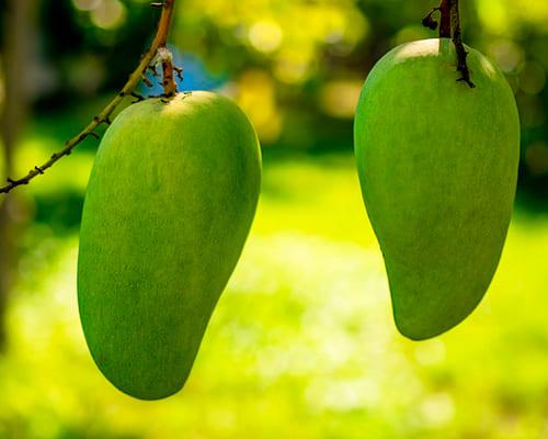 Названия фруктов на испанском языке