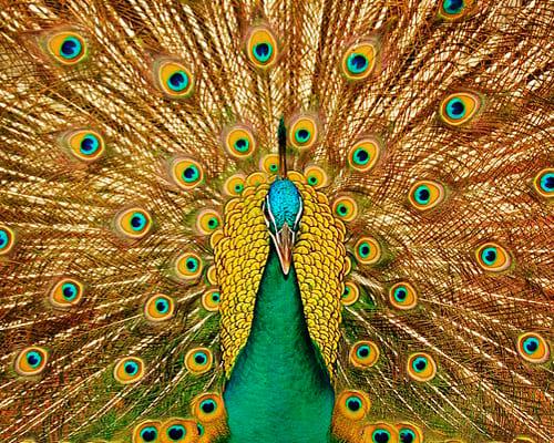 Дикие птицы на испанском языке