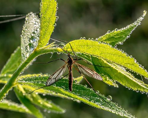 Испанские фразы на тему насекомые